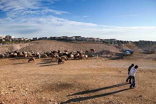 Bedouins from the Jahalin tribe with their sheep near  Maale Adumim